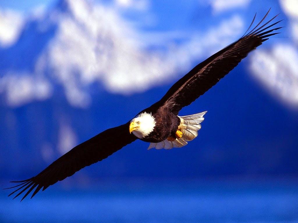 qué es el águila