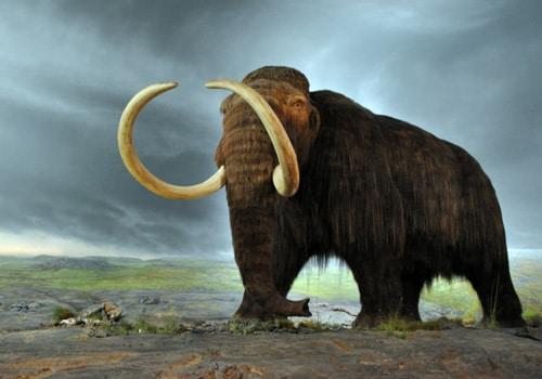 extinción endémica