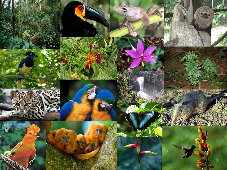 importancia del nicho ecologico