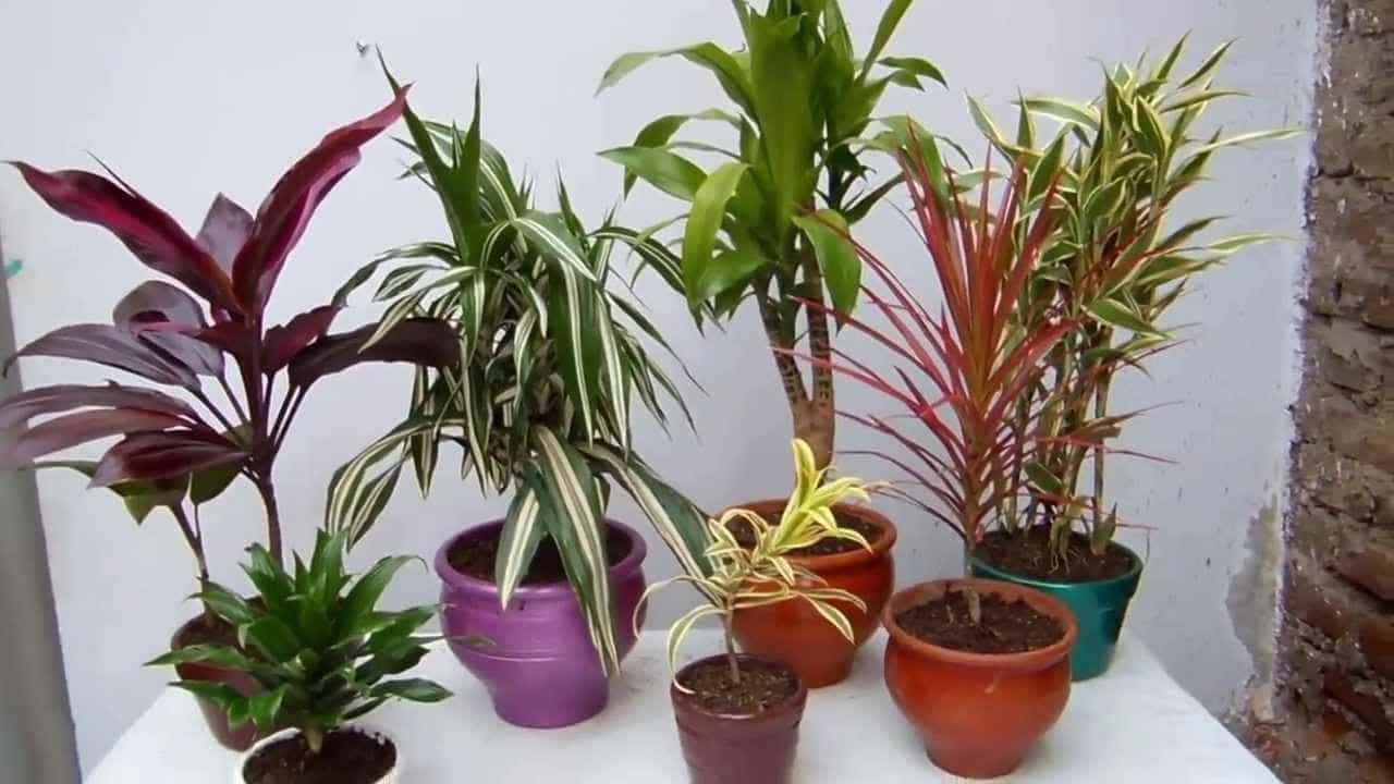 caracteristicas de plantas de interior