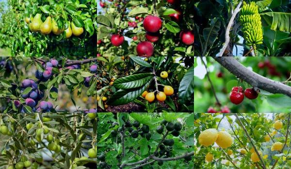 Rboles frutales 15 variedades caracteristicas y cuidados for Las caracteristicas de los arboles
