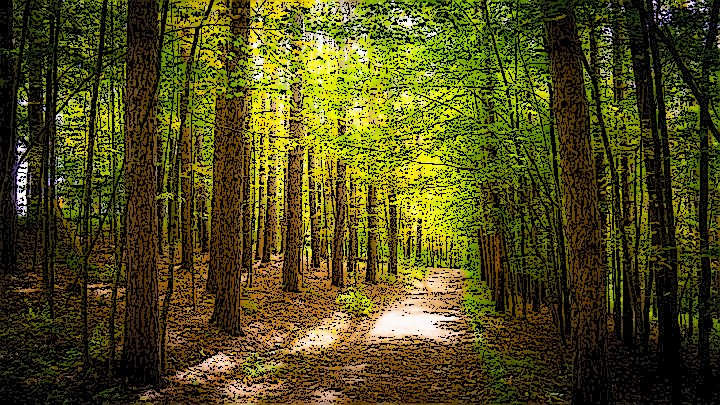 clima bosque