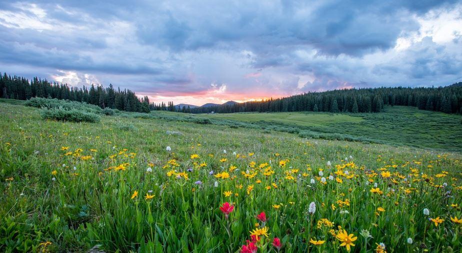 pradera flora