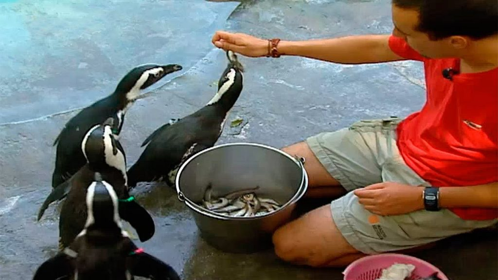 que comen con los pinguinos
