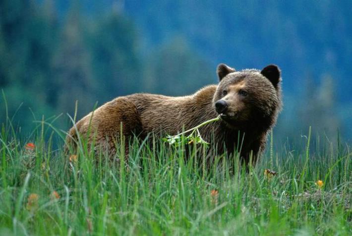 donde vive el oso
