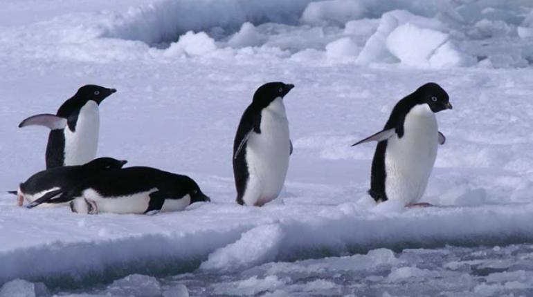 donde viven los pinguinos