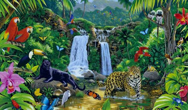 Selva Que Es Ejemplos Caracteristicas Clima Flora Y Fauna
