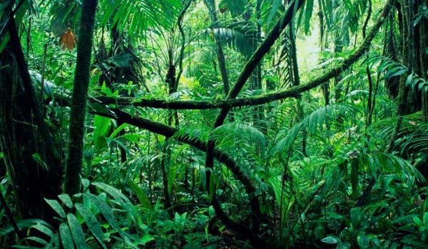 Selva Qué Es Ejemplos Características Clima Flora Y Fauna