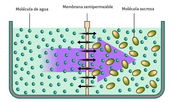 ÓSMOSIS | Qué es, tipos de ósmosis, características e importancia