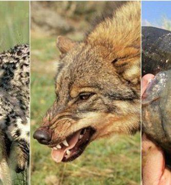 Animales-carnívoros