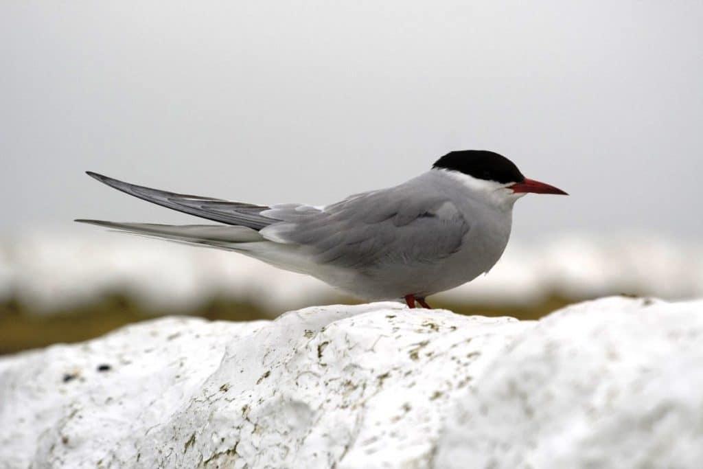 Características Aves Migratorias