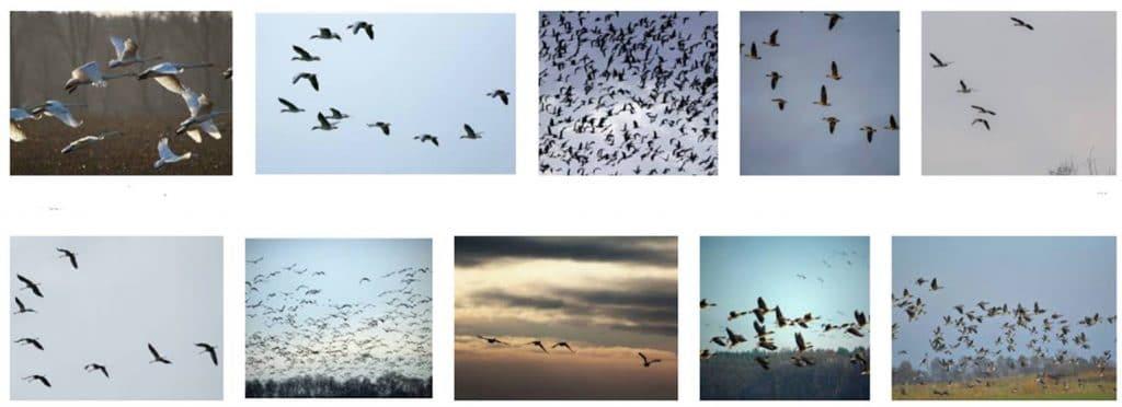 Características de Aves Migratorias