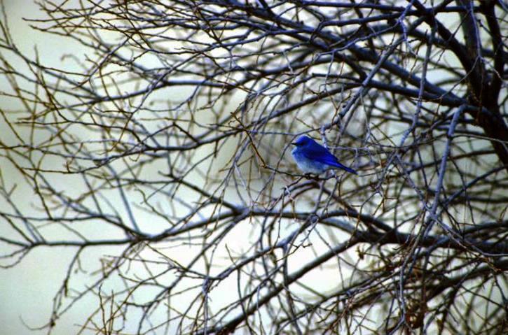 orientacion aves migratorias