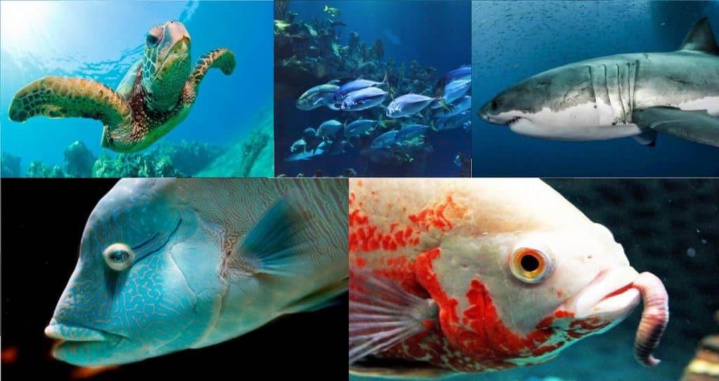 dieta de los animales acuaticos