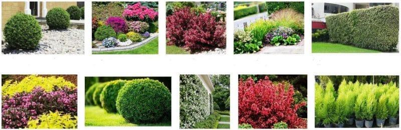 arbustos jardín