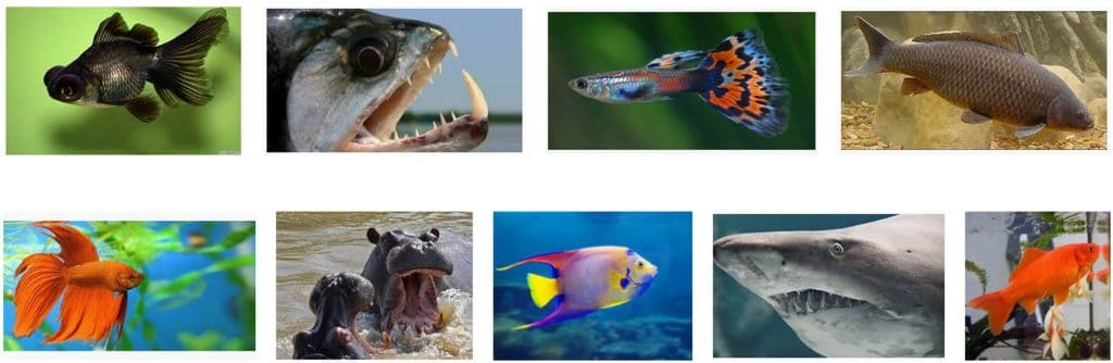 peces y animales de agua dulce