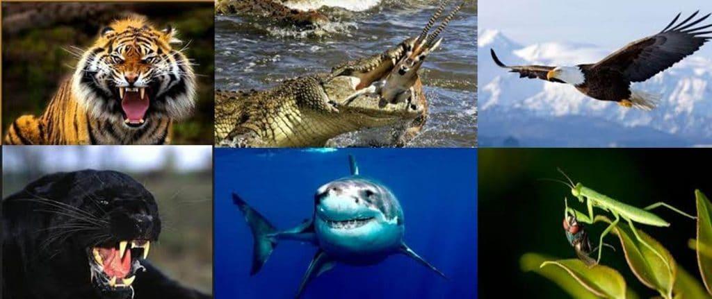 ejemplos de depredadores