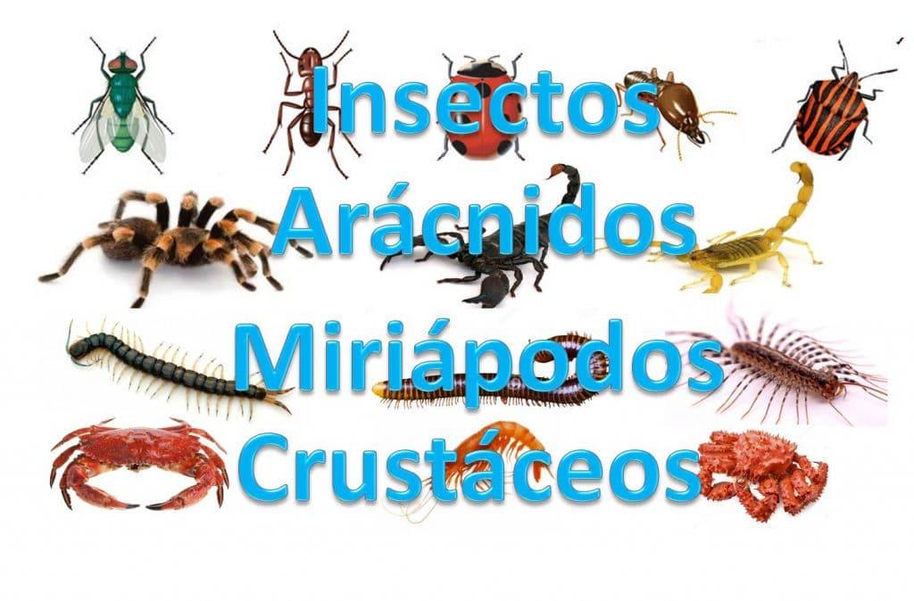 artropodos ejemplos