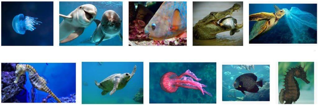 animales que viven en el agua