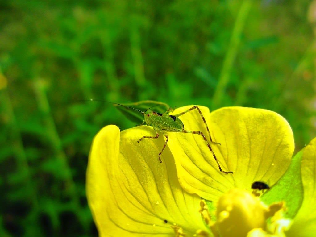 insectos peligrosos