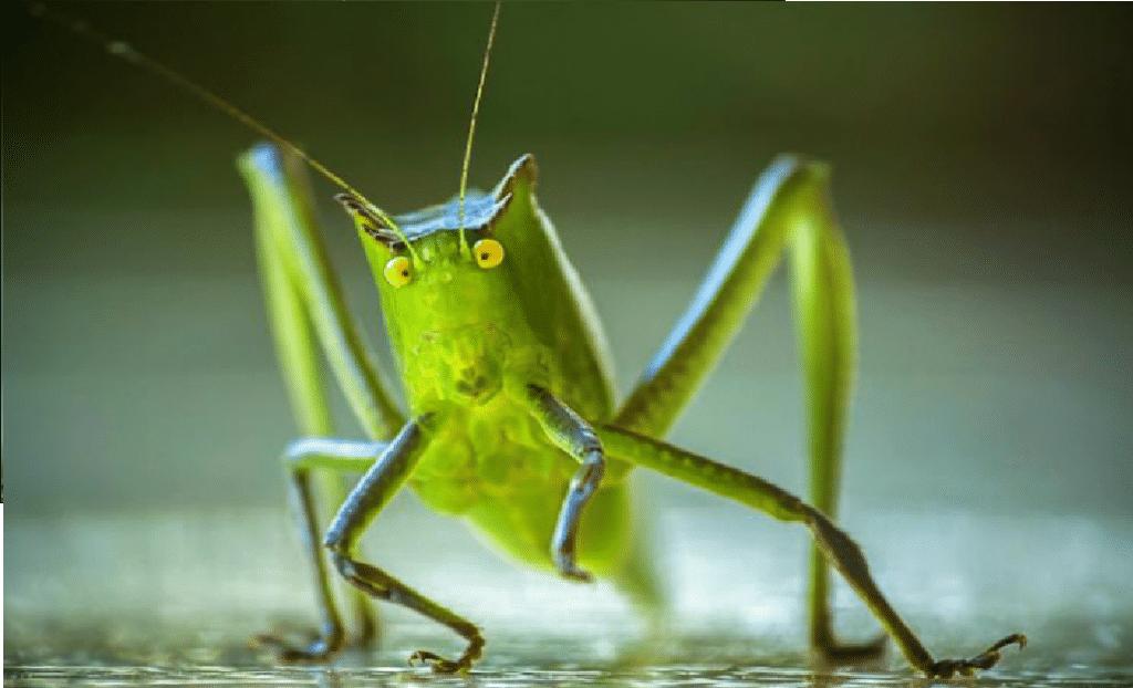 insecto terrestre
