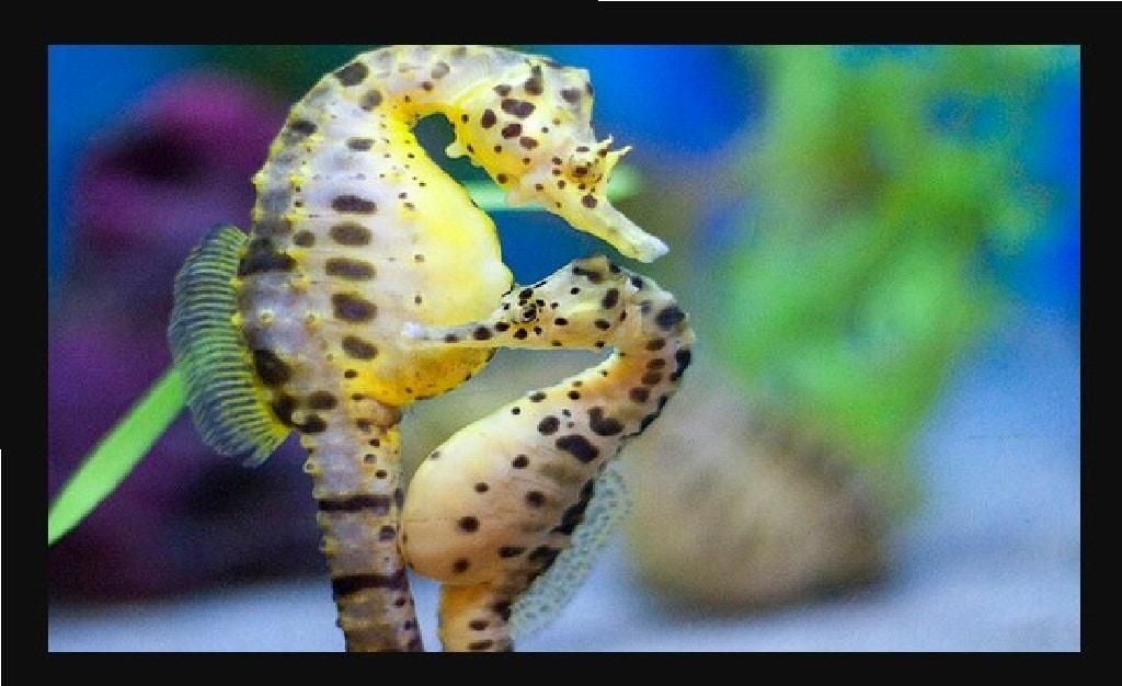 reproducción bajo el mar
