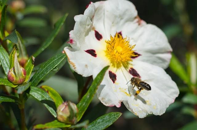 jara con abejas